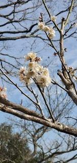 空,花,春,屋外,樹木,座る,腰掛け,ブロッサム,支店