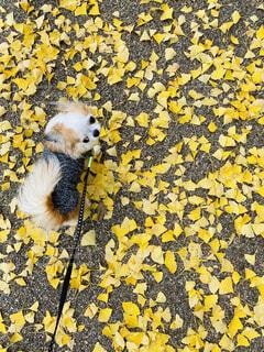 動物,黄色,ライフスタイル