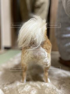 チワワのお尻りの写真・画像素材[4054940]
