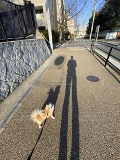 犬,動物,チワワ,影,お散歩