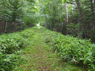 自然,森林,緑