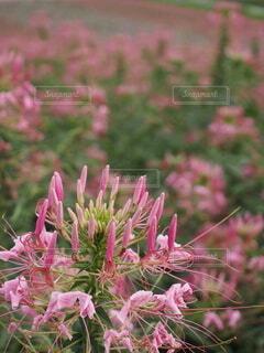 自然,花,旅先で見つけた花心惹かれました