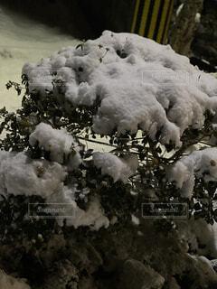 自然,冬,雪,壁紙,2021