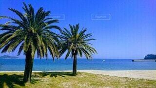 自然,風景,海,空,屋外,ビーチ,青,水面,海岸,樹木,ヤシの木