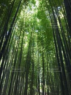自然,森林,太陽,緑,林,日差し,光,竹,新緑,竹林,鎌倉,空気,スピリチュアル