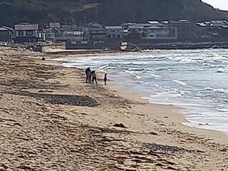 自然,風景,海,屋外,ビーチ,砂浜,水面,海岸,景色,日中