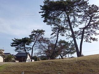 風景,空,公園,芝生,屋外,雲,樹木,草木,日中,松の木