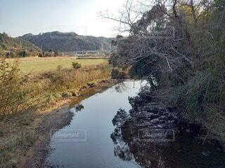 自然,風景,空,屋外,青空,川,水面,草,樹木,草木