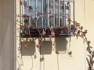 屋外,植物,バラ,玄関,陽射し