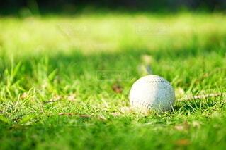 ひとりぼっちの野球ボールの写真・画像素材[4150322]