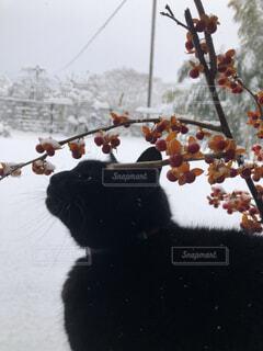 猫,冬,雪,ツルウメカズラ