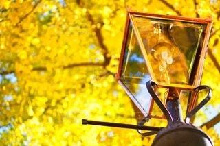 秋,紅葉,銀杏,街灯,横浜,山下公園