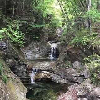 自然,水面,樹木,渓谷,草木,ストリーム,カスケード