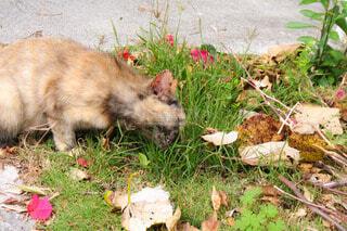 猫,風景,花,動物,屋外,小道,草,ねこ,路地,地面,路地裏,草木,ネコ科,ネコ