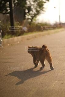 お散歩中🐈の写真・画像素材[4163705]