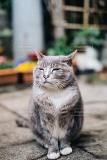 カメラを見ている猫の写真・画像素材[4169155]