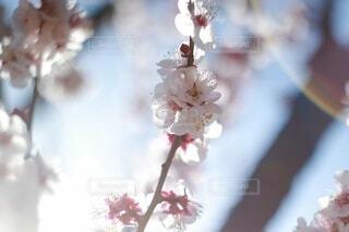 花のクローズアップの写真・画像素材[4190509]