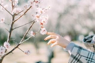 木の枝に座っている人の写真・画像素材[4190512]