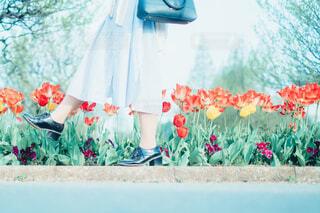 カラフルな花のグループの写真・画像素材[4196940]