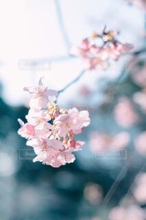 花のクローズアップの写真・画像素材[4233243]