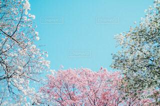 木のクローズアップの写真・画像素材[4233247]