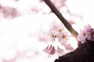 花のぼやけたイメージの写真・画像素材[4235393]