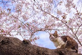 木の枝に座っている猫の写真・画像素材[4235396]