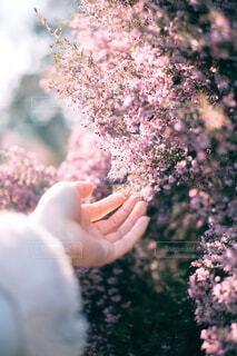 花を持つ手のクローズアップの写真・画像素材[4235397]