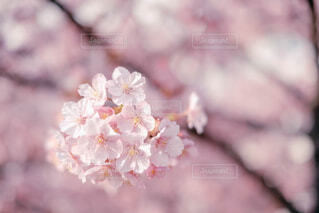 花のクローズアップの写真・画像素材[4235394]