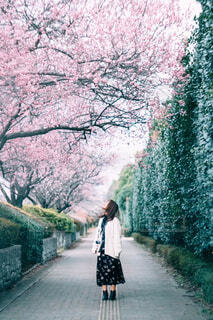 木の隣の通りを歩いている人の写真・画像素材[4273045]