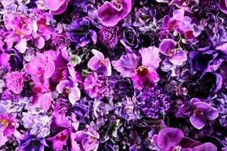 風景,花,屋外,緑,紫,ドライフラワー,景色,花びら,撮影,イルミネーション,イルミ,丸の内,草木,造花,ブルーム,フローラ,ナイトイルミ