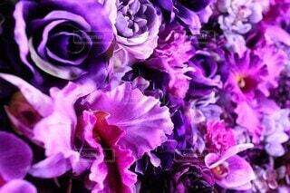 風景,花,屋外,緑,紫,バラ,ドライフラワー,景色,花びら,撮影,薔薇,イルミネーション,イルミ,丸の内,草木,造花,ブルーム,フローラ,ナイトイルミ