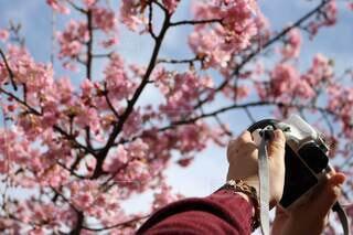 風景,空,花,春,カメラ,カメラ女子,屋外,撮影,樹木,人物,人,桃,桜の花,さくら,ブロッサム