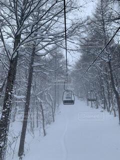 冬,雪,屋外,樹木,スキー,運動,ウィンタースポーツ