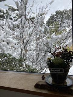 花,冬,屋内,屋外,植物,花瓶,室内,窓,樹木,植木鉢,観葉植物,草木