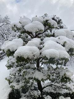 自然,風景,冬,雪,屋外,景色,樹木,冷たい,草木,針葉樹,覆う,山腹