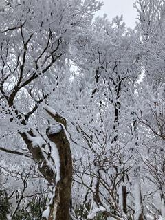 自然,冬,雪,屋外,雪山,樹木,冬山,冷たい,草木
