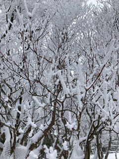 自然,冬,森林,雪,屋外,樹木,霜,冷たい,支店