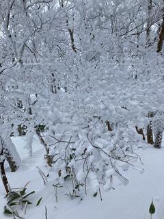 自然,冬,雪,屋外,樹木,覆う