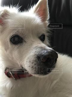 我が家の愛犬の写真・画像素材[1191424]