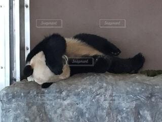 パンダ,悩ましいパンダ