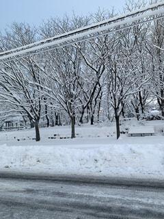 風景,空,冬,木,雪