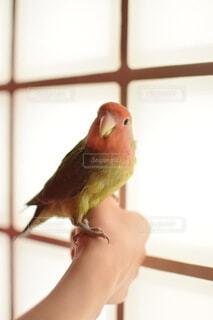 動物,鳥,屋内