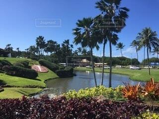 自然,水面,景色,ヤシの木,ハワイ,ゴルフ場,パーム,コオリナ