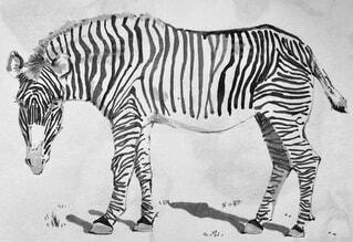 動物,モノクロ,アート,白黒,素材,漫画,テキスト,シマウマ,スケッチ