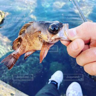 海,魚,屋外,釣り