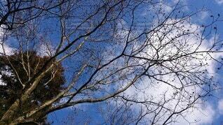 自然,空,森林,屋外,樹木,小枝