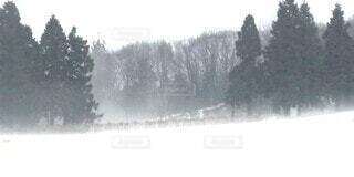 自然,空,森林,雪,屋外,霧,樹木