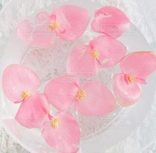 花,ピンク,水,水面,花びら,パステル,木立ベゴニア