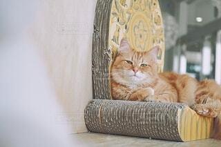 猫,動物,黄色,オレンジ,ふわふわ,座る,目,ネコ科,もふもふ,ぼけ,まどろむ,爪とぎ